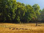 The Bandhavgarh National Park tour