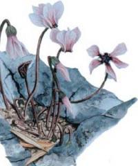 Springtime Flowers tour