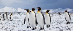 Antarctica Cruises & Voyages