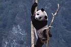 China and Panda tour