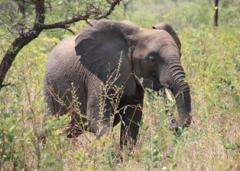 Heart of Africa tour including Zambia, Namibia, Botswana & Victoria Falls