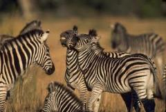 Big Game and Barefoot Luxury tour