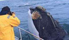 Whale-watching tour