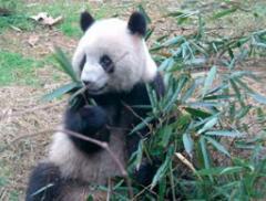 Panda Experience tour