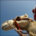 Camel Trekking tour in Tunisia