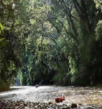 A Rainforest Encounter private tour