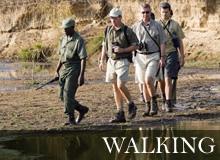 African Walking Safaris