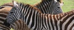 Masai Mara National Reserve holidays