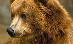 Bears and Volcanoes tour