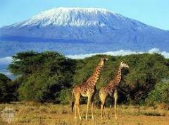 Kilimanjaro Climb tour